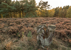 Forêt de chasse de Cannock Photo stock