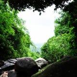 Forêt de coeur Image libre de droits