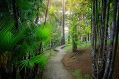 Fort-de-France, la Martinique : Jardin tropical de balata photo stock