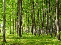 Forêt de juin Image libre de droits