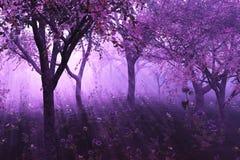 Forêt de lavande Image libre de droits