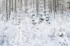 Forêt de Milou Images libres de droits