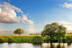 Forêt de nature de paysage d'arbre d'été de ciel de rivière Image libre de droits