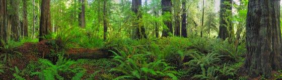 Forêt de panorama Photos libres de droits