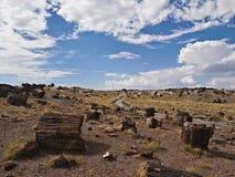 Forêt de Petrifaid, Arizona Photos libres de droits