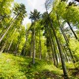Forêt de source Photographie stock