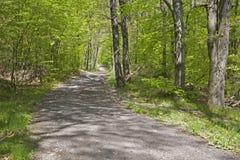 Forêt de voie au printemps Photo stock