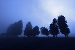 Forêt effrayante la nuit Photographie stock libre de droits