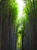 Forêt en bambou de Sagano dans Arashiyama, Kyoto, Japon Image stock