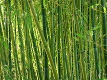 Forêt en bambou verte Images stock