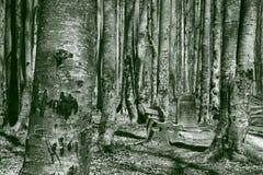 Forêt en pierre Photo libre de droits