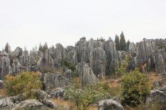 Forêt en pierre Photographie stock