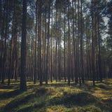 Forêt en Pologne Image stock