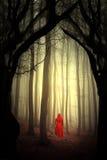 Forêt enchantée Photographie stock libre de droits