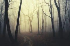 Forêt enchantée par obscurité de cuvette de route Photographie stock libre de droits