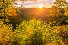 Forêt ensoleillée de chute Images libres de droits
