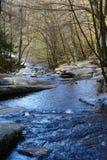 Forêt et rivière Photographie stock libre de droits