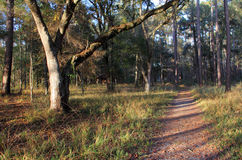 Fort Gadsden Trail. Tranquil trail at Fort Gadsden, Apalachicola National Forest, Florida Stock Image
