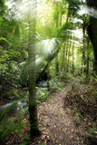 Forêt humide tropicale Photo stock