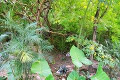 Forêt humide Yucatan Mexique Amérique Centrale de jungle Photographie stock libre de droits