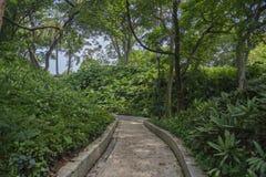 Fort Inblikkende Park het lopen weg tussen vegetatie royalty-vrije stock afbeeldingen