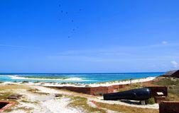 Fort Jefferson coastline. Fort Jefferson National Park coastline with view of Sooty Terns flying overhead and a cannon Royalty Free Stock Photo