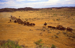 Fort Keogh Livestock and Range Research Station Stock Images