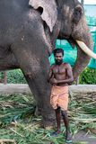 Fort Kochi, India - 16th November 2017: A captive elephant, with iots Mahout, kept for use in Hindu ceremonies in Fort Cochin Indi. A Royalty Free Stock Image