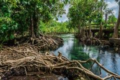 Forêt Krabi Thaïlande de marais de pom de Tha Images stock