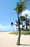 Fort Lauderdale beach Florida. Fort Lauderdale beach in Florida USA Stock Photography
