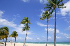 Fort Lauderdale tropical beach palm trees Royalty Free Stock Images