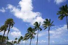 Fort Lauderdale tropical beach palm trees Stock Photography