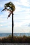 Fort Lauderdale Wyrzucać na brzeg drzewka palmowego Fotografia Royalty Free