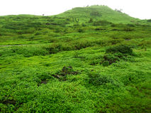 Fort Lohgad Greenery-I Royalty Free Stock Image