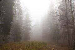 Forêt mystique Photo stock