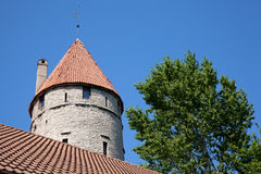 Fort near green tree in Tallinn Royalty Free Stock Image