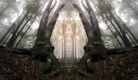 Forêt reflétée hantée par résumé Images stock
