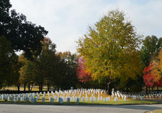 Fort Smith National Cemetery in autumn. National Cemetery in Fort Smith, Arkansas white tombstones lined up on a beautiful green lawn with autumn colors, gently Royalty Free Stock Image