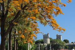 Fort St Peter avec les arbres de floraison de jaune dans le port de Bodru image libre de droits