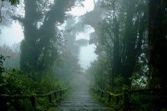 Forêt tropicale avec des escaliers Photographie stock libre de droits