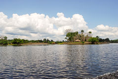 Forêt tropicale d'Amazone : Aménagez en parc le long du rivage du fleuve Amazone près de Manaus, Brésil Amérique du Sud Photo libre de droits