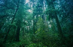 Forêt tropicale du nord-ouest américaine Image libre de droits