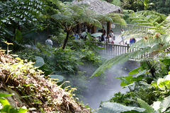 Forêt tropicale en brouillard Image libre de droits
