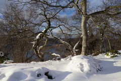 Fort Tryon Park Winter Royalty Free Stock Photos