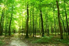 Forêt verte Images stock
