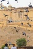 fort złota Zdjęcia Stock