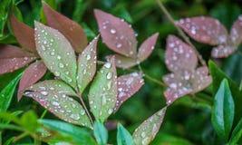 Fortalecedor de plantas Fotografía de archivo libre de regalías