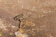 Fortaleza Canyon. Frog at Fortaleza Canyon, Cambara do Sul, Rio Grande do Sul, Brazil Royalty Free Stock Image