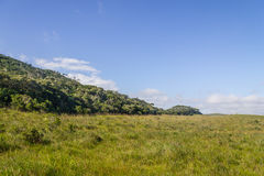 Fortaleza Canyon vegetation Royalty Free Stock Image