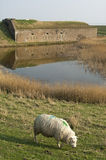 Forte Ellewoutsdijk, frente marítima e Bovídeos da pastagem fotos de stock royalty free